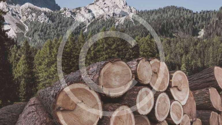 Timber Purchasing